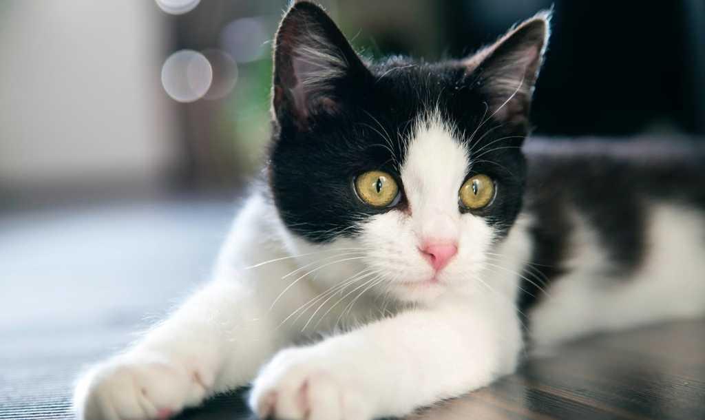 kittenfishing-phishing-min-1024x610