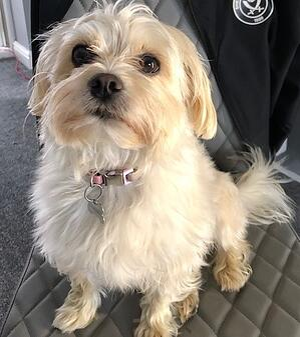 Lilly international pet day