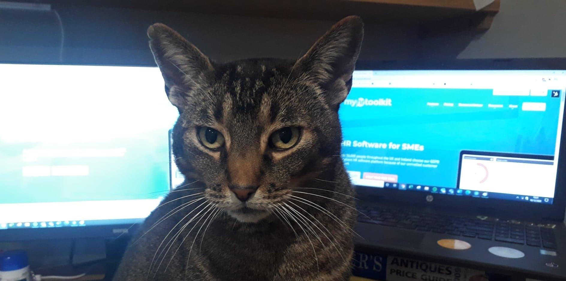 webinar-video-call-distractions-pets